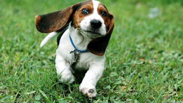 Снимаем портретное фото животных - собаки 78 (600x338, 66Kb)