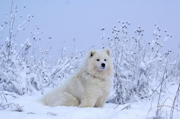 Снимаем портретное фото животных - собаки 80 (600x398, 57Kb)
