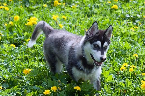 Снимаем портретное фото животных - собаки 82 (600x398, 107Kb)
