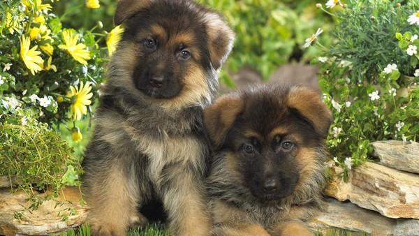 Снимаем портретное фото животных - собаки 87 (600x338, 84Kb)