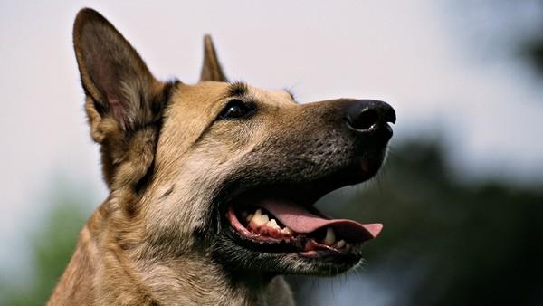 Снимаем портретное фото животных - собаки 92 (600x338, 44Kb)