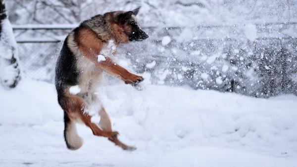 Снимаем портретное фото животных - собаки 100 (600x338, 50Kb)