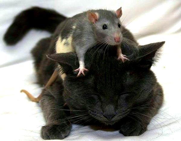 Картинки по запросу смешные кошки и собаки
