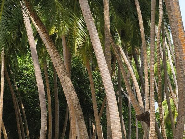 Знаете ли вы какой сезон на Мальдивах самый лучший 7 (600x450, 130Kb)