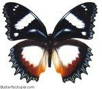 Превью mariposa (440x379, 45Kb)