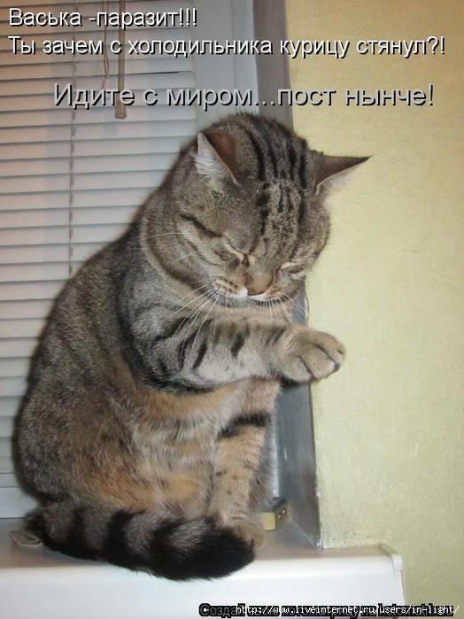 Картинки с котами прикольные на работе