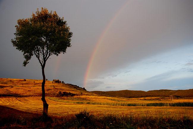 Rainbow_6 (650x436, 69Kb)