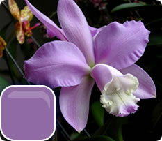 top10_color_cattleya (233x202, 12Kb)