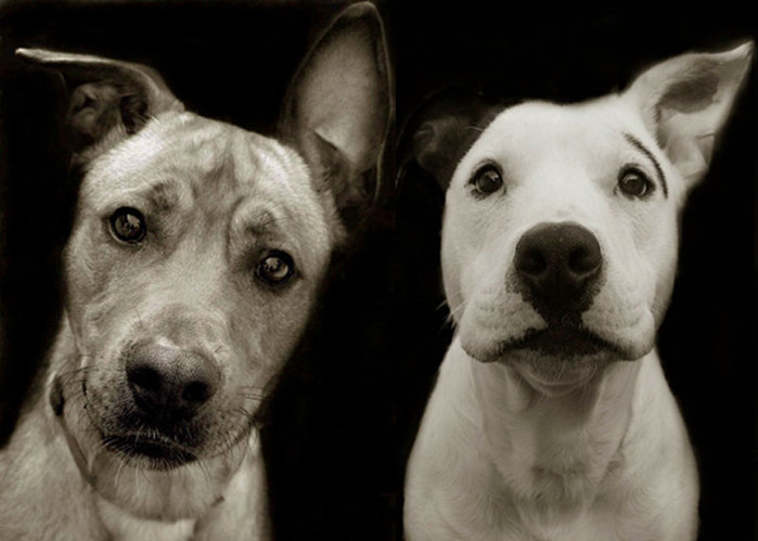 3925073_shelterdogs1 (700x499, 55Kb)