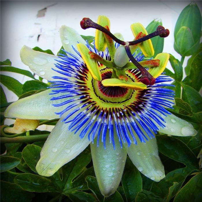 Картинки необыкновенные цветы 6