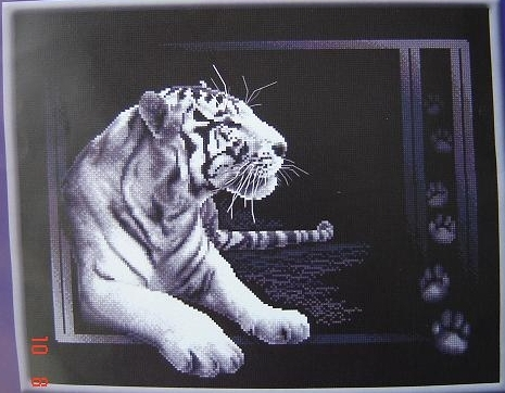 4804545_J27_Belii_tigr (465x362, 143Kb)