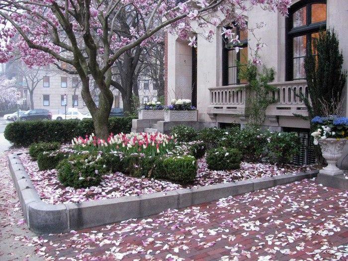 весна и осень в бостоне (19) (700x525, 146Kb)