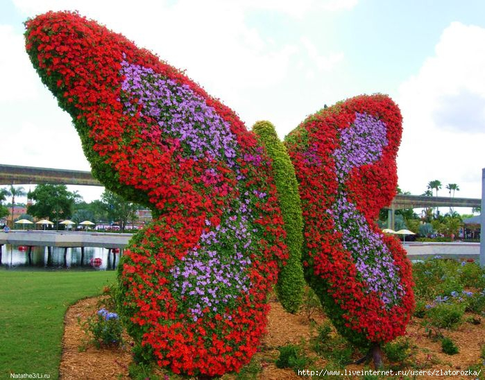 пеперуда (699x548, 274Kb)