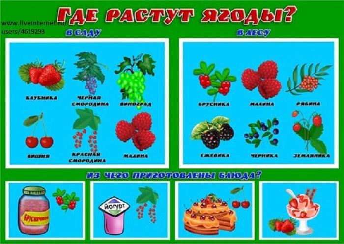 Описание грибов с фото  Съедобные грибы ягоды травы