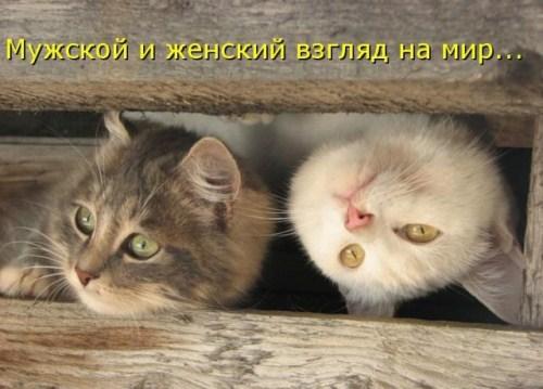 4821332_1298498077_16 (500x359, 47Kb)