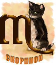 Кошка Скорпион всегда добивается своего.  Если она облюбует себе ваше кресло, то, сколько вы ее не сгоняйте...
