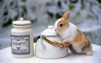 Превью Easter-Bunny-2155 (700x437, 180Kb)