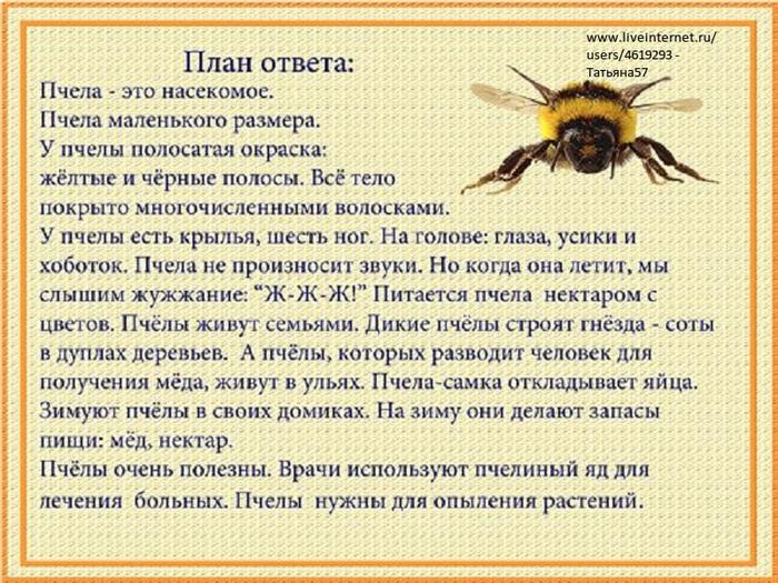 насекомые-ответ (700x525, 195Kb)