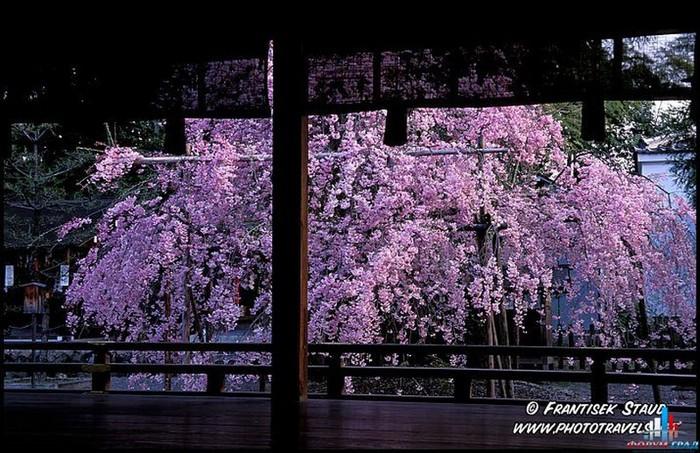 Японский сад фото 21 (700x453, 133Kb)