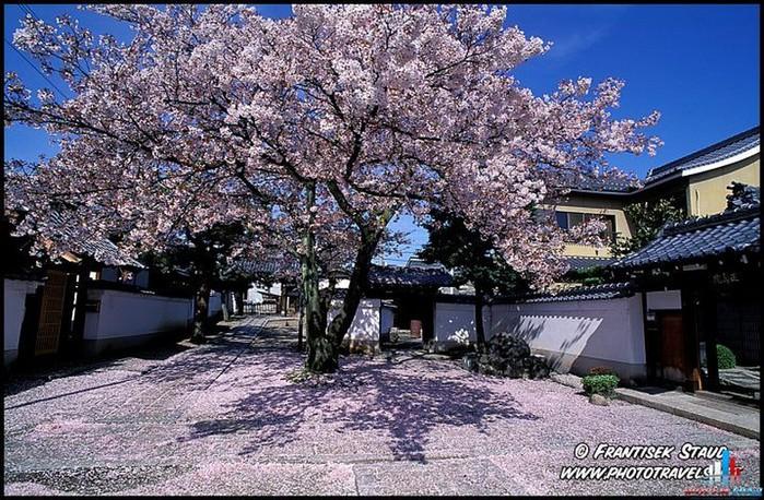 Японский сад фото 35 (700x458, 168Kb)