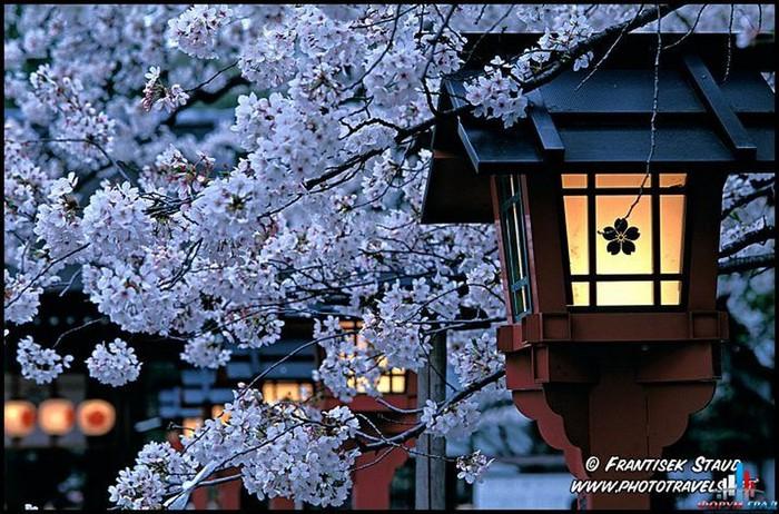 Японский сад фото 56 (700x462, 136Kb)