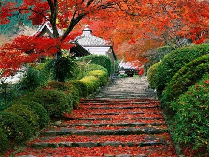 Японский сад фото 68 (700x525, 147Kb)