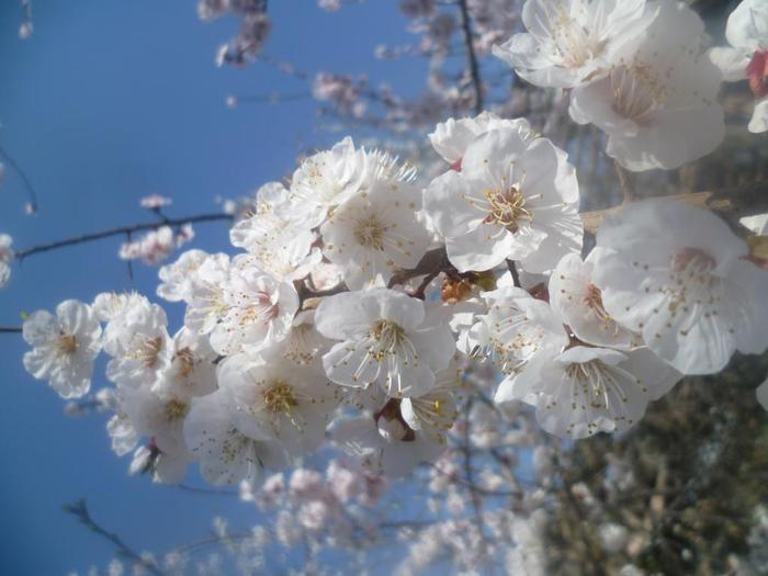 весна сегодня/4587378_314 (700x525, 42Kb)