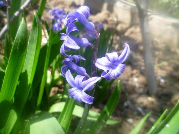 цветок/4587378_Kakoi_eto_cvetok (700x525, 45Kb)