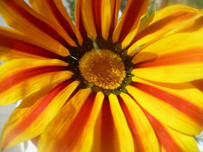 цветок 2/4587378_Cvetok (700x525, 42Kb)