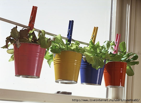 container-gardening-10 (540x393, 120Kb)