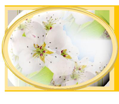 яблонька (400x350, 148Kb)