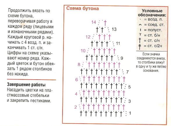 схема бутона антуриума (587x435, 103Kb)