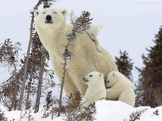 Заботливые мамочки и милые дитишки!
