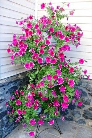 цветы (298x448, 53Kb)
