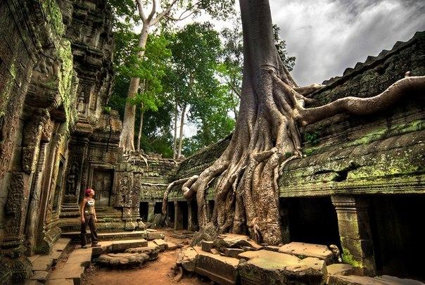 дерево (604x405, 98Kb)