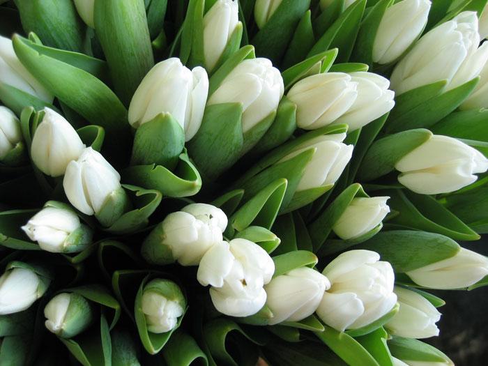 flowers007 (700x525, 76Kb)