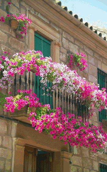 цветы на лоджии.jpg1 (349x559, 67Kb)