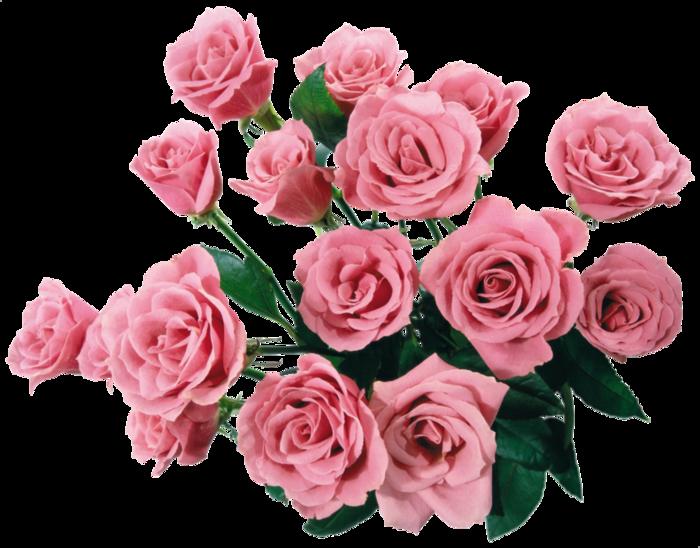 Мои покупки картинки цветов для фотошопа Liod