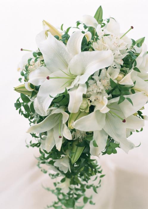 Каталея цветок картинки 5