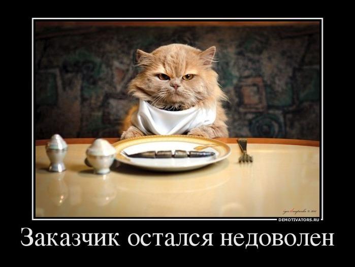 Коты - привередливые животные...