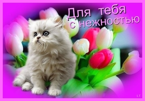 Открытки для тебя котенок