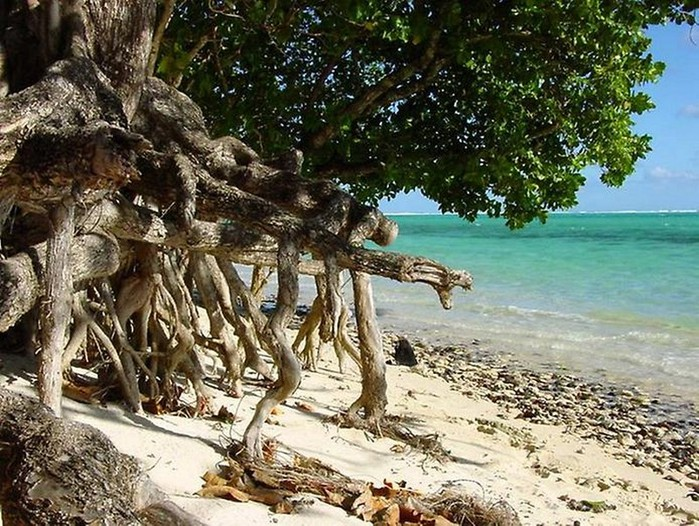 Фото-путешествие на остров Хуахине - Французская Полинезия 11 (700x526, 160Kb)