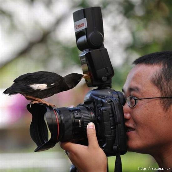bird (550x550, 130Kb)