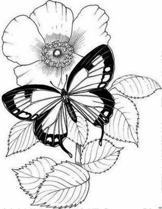 Картинки бабочек и цветов нарисованные 1