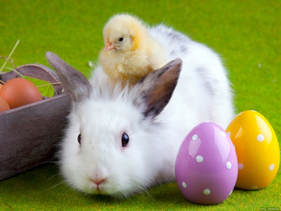 x-other-animals--зверюшки--easter_large (550x413, 45Kb)