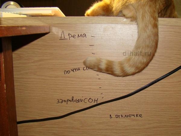 Индикатор состояния - кот почти спит