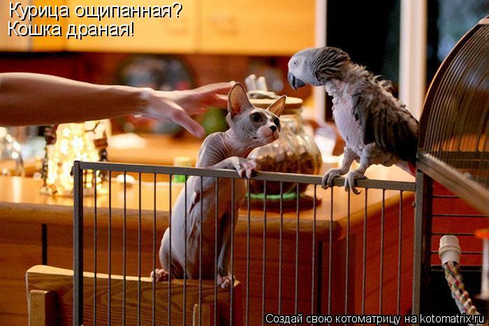 85489052_4437747_cat_kitten_kotenok_smeshnye_koty_krasivye_koty_smeshno_prikolyozhivotnyh_216 (700x467, 63Kb)
