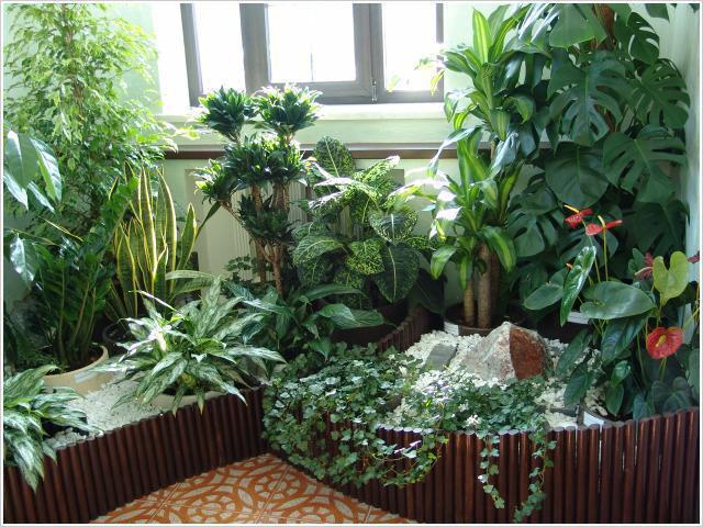 Комнатные растения и приметы самое