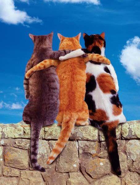 cats_69 (454x599, 48Kb)