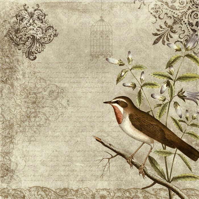 bird_vintage_texture_by_etoile_du_nord-d31xl6s (700x700, 200Kb)